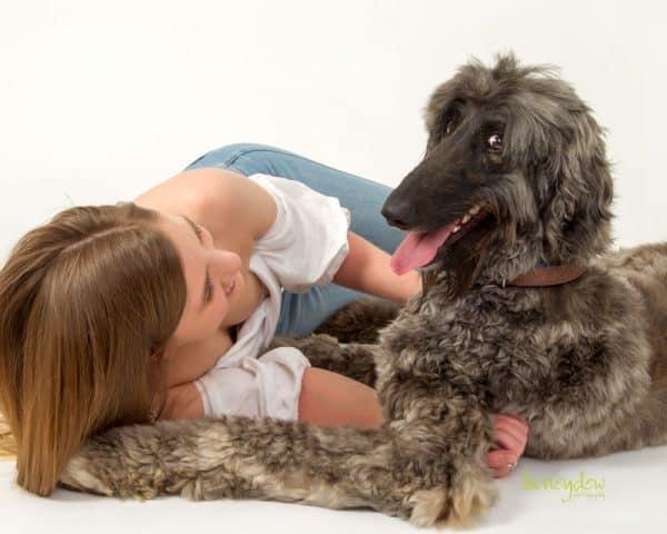 Pet photography Sydney playful hound dog photography
