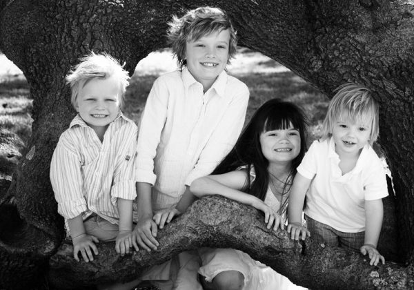 family photography Sydney kids looking out of a tree